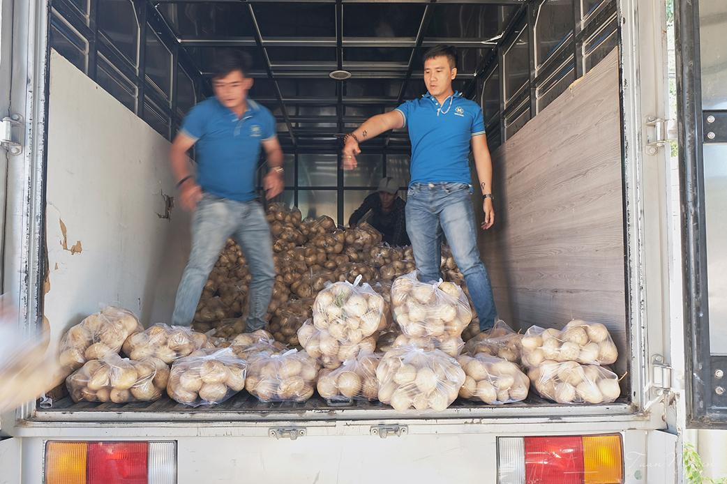 Malloca 'giải cứu' củ sắn cho nông dân Đồng Nai